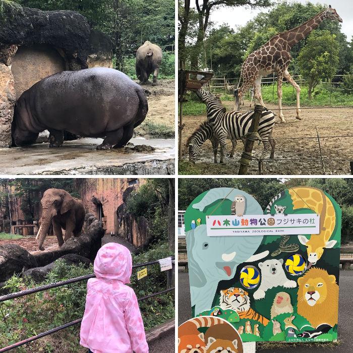 動物園のエ園内