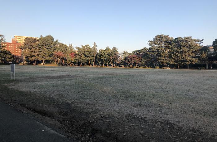 枯れた芝生