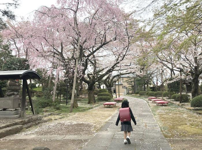 桜の木の下を通る様子